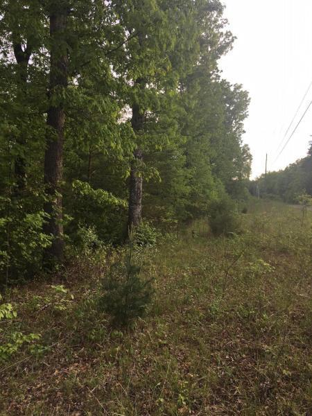Dripping Springs Rd, Monterey, TN 38574 (#1062609) :: Billy Houston Group