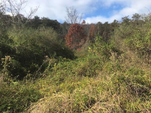 9.6 Acres Dyer Hollow Rd, Mohawk, TN 37810 (#1062993) :: CENTURY 21 Legacy