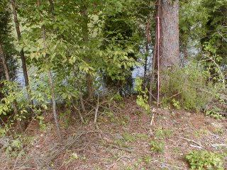 Lot 61 Blue Heron Drive, Rockwood, TN 37854 (#1065098) :: Billy Houston Group
