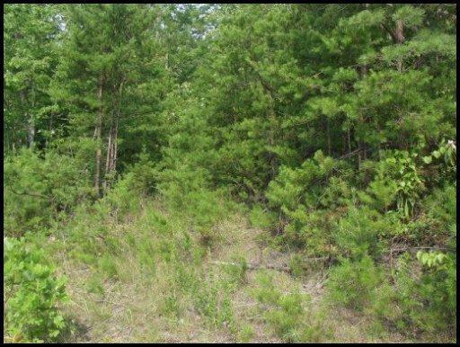 Red Bud Lane, Madisonville, TN 37354 (#1070067) :: Catrina Foster Group