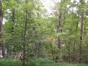 1302 Black Cloud Drive, Crossville, TN 38572 (#1071084) :: CENTURY 21 Legacy