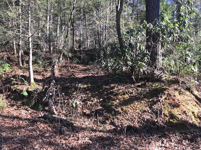 Bluestone Way Way, Townsend, TN 37882 (#1072361) :: Venture Real Estate Services, Inc.
