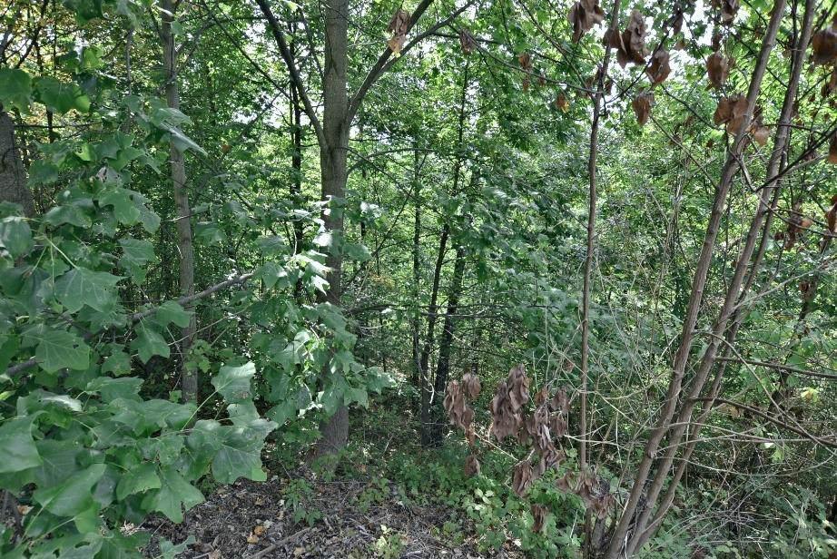 Lot 158-E Harmony Hill Lane - Photo 1