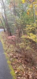 189 Scarborough Drive - Photo 9