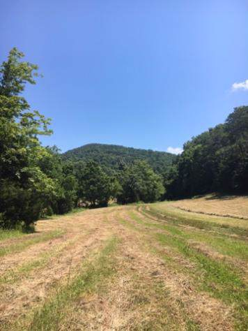 Skaggs Hollow Rd, Tazewell, TN 37879 (#1101049) :: Shannon Foster Boline Group
