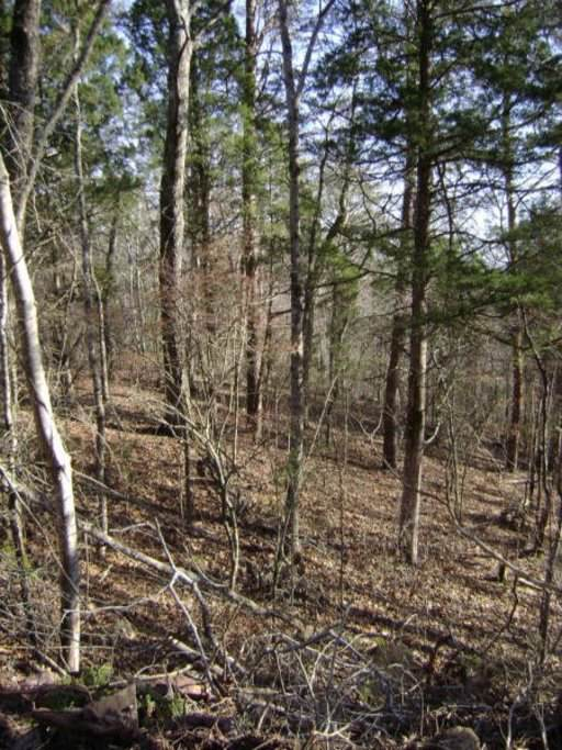 Tellico Camp Rd, Madisonville, TN 37354 (#1105818) :: Shannon Foster Boline Group