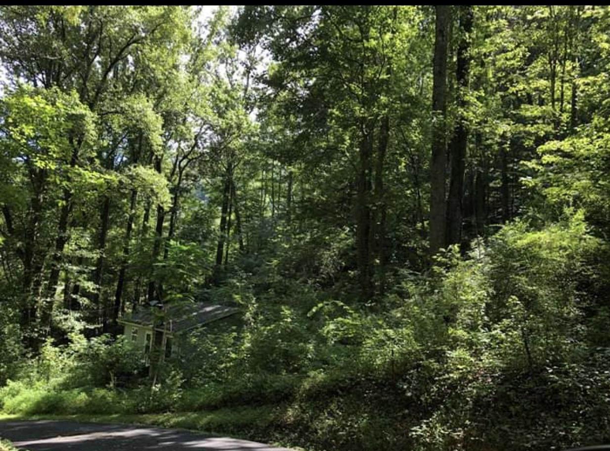 241 Mountain Side Lane - Photo 1