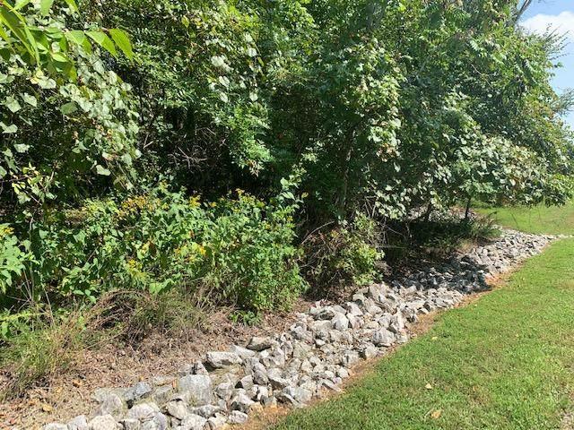 142 E Shore Drive, Rockwood, TN 37854 (#1129910) :: Venture Real Estate Services, Inc.