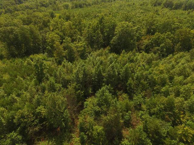 104.55ac Brush Creek Rd, Pikeville, TN 37367 (#1130260) :: Shannon Foster Boline Group