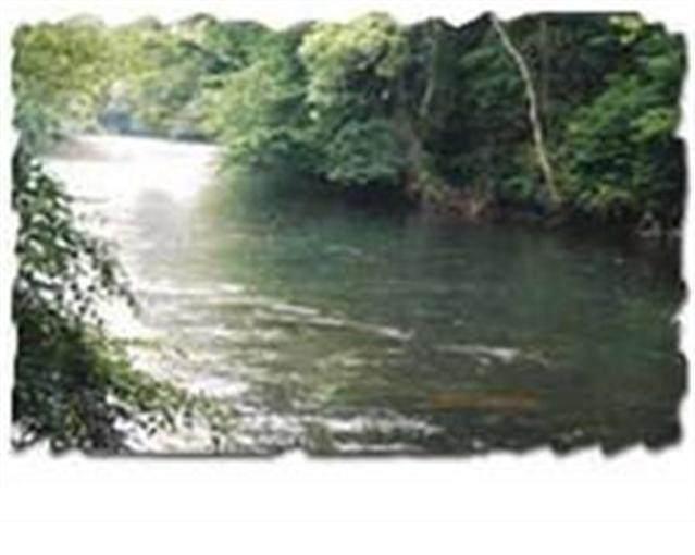 156 Tree Frog Lane Lane, Benton, TN 37307 (#1139061) :: Billy Houston Group