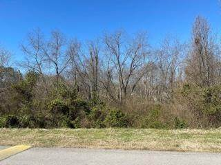 Lot 151 Cherokee Drive, Vonore, TN 37885 (#1144716) :: Cindy Kraus Group | Realty Executives Associates