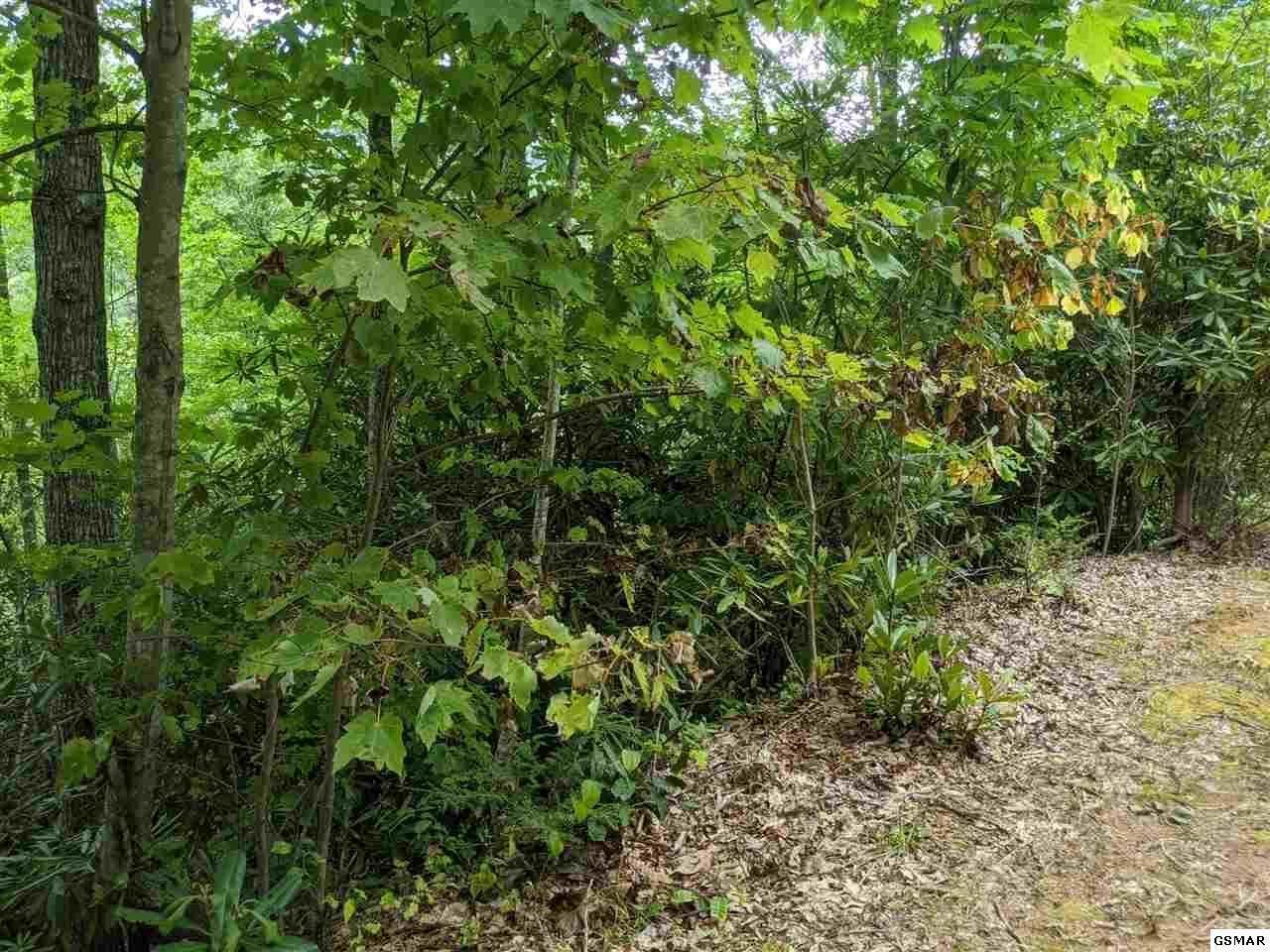 Lot 15 Black Gum Gap Rd - Photo 1