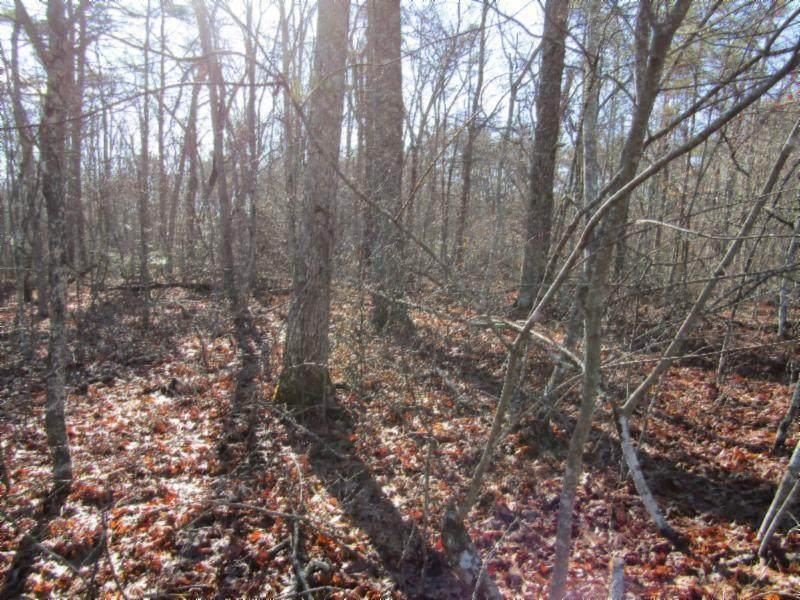 Lot 4 Mountain Ash Drive - Photo 1