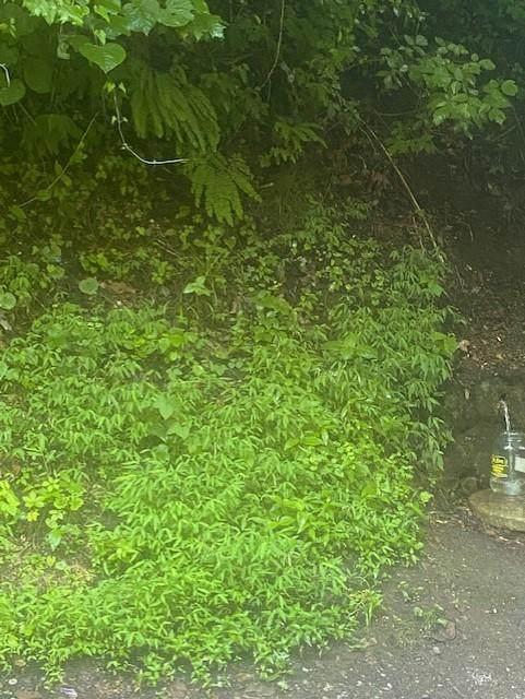 8535 Porterfield Gap Rd - Photo 1