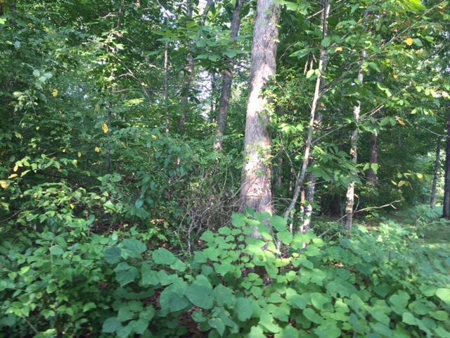 4056 Lone Wolf Circle, Crossville, TN 38572 (#1052576) :: CENTURY 21 Legacy