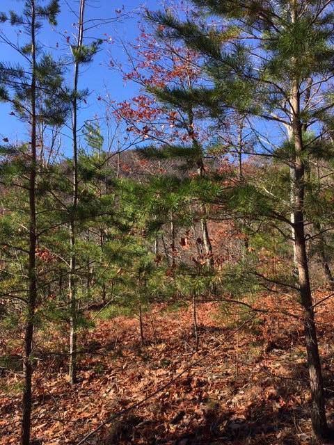 Bluff Mountain Rd, Sevierville, TN 37862 (#1088652) :: The Terrell Team