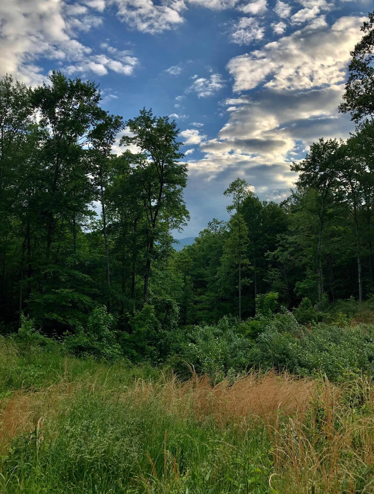 Timberland Tr - Photo 1