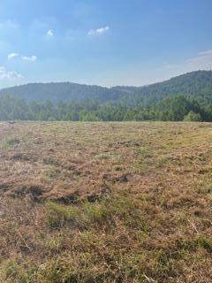 123 Pineberry East Rd, Oak Ridge, TN 37830 (#1161871) :: Shannon Foster Boline Group
