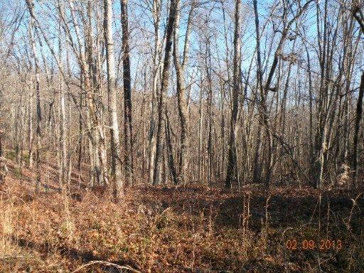 Lot 4 Trotter Rd, Grandview, TN 37337 (#830106) :: Billy Houston Group