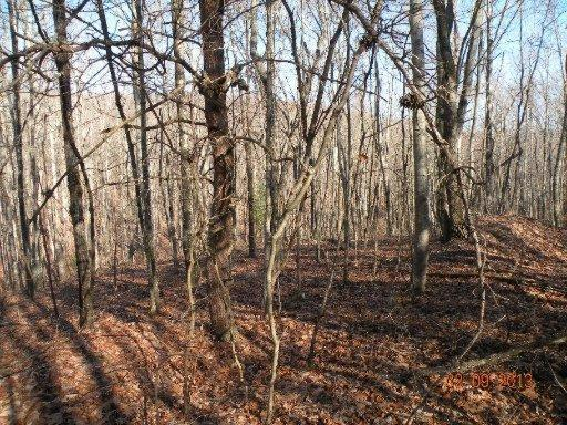 Lot 5 Trotter Rd, Grandview, TN 37337 (#830108) :: Billy Houston Group