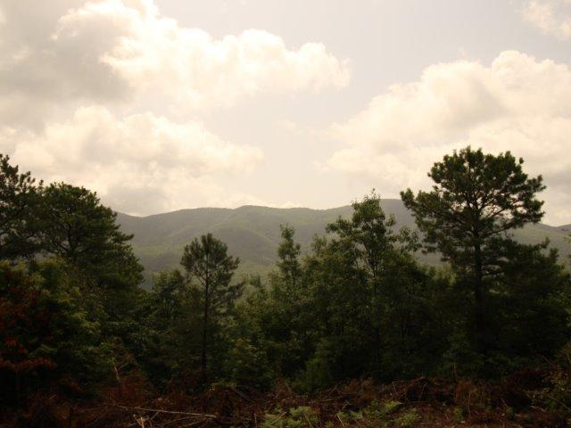 10 & 11 Smithfield Rd 10,11, Tellico Plains, TN 37385 (#907507) :: Billy Houston Group
