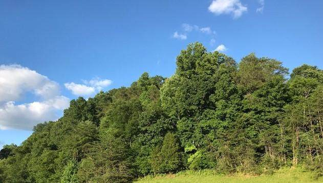 12 Ac Pickens Gap Rd - Photo 1