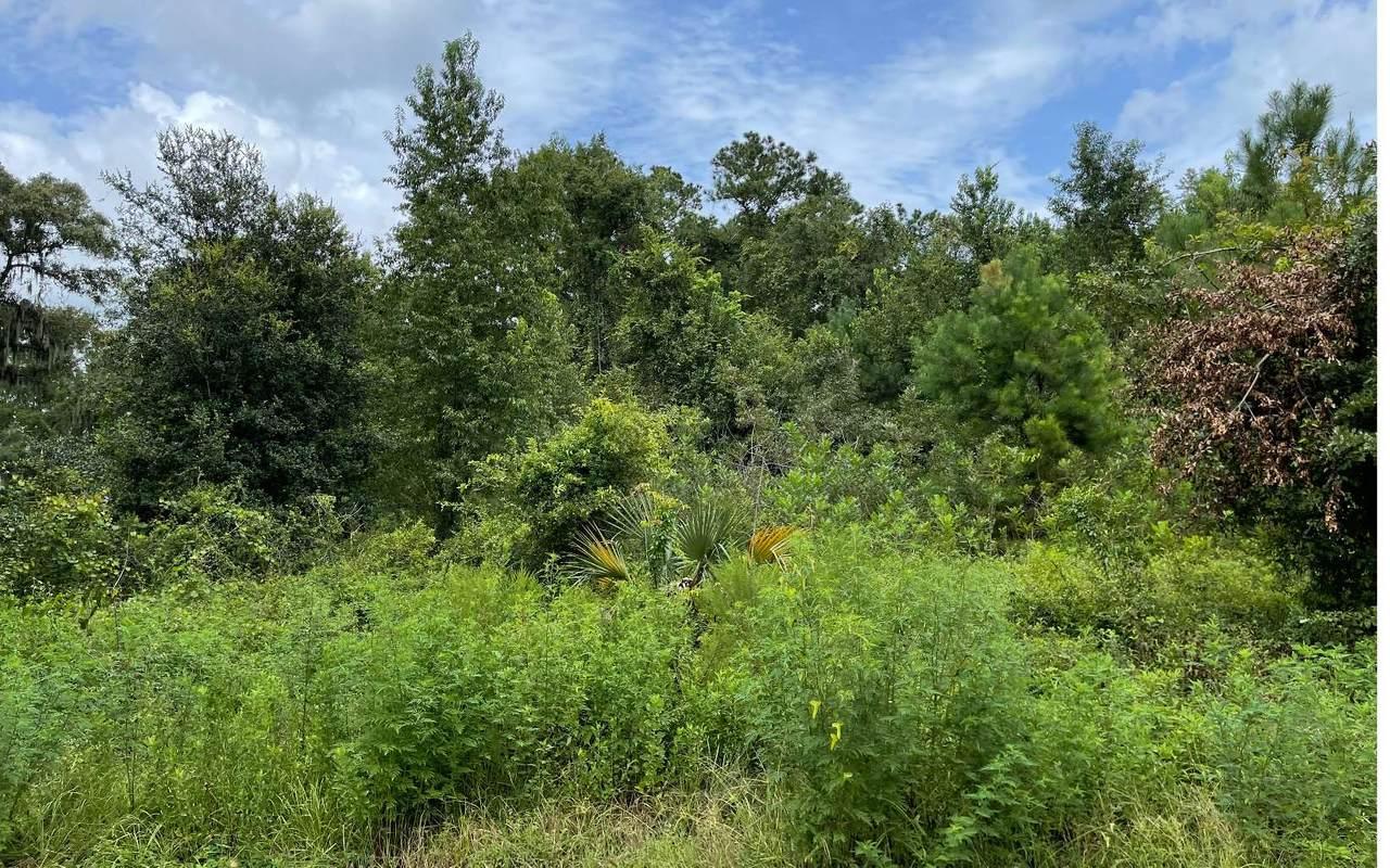 TBD Green Acres Way - Photo 1