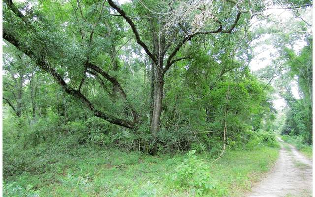 LOT51 198TH TRAIL, OBrien, FL 32060 (MLS #104647) :: Better Homes & Gardens Real Estate Thomas Group