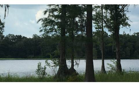 LOT30 SE Oak Tree Road, Branford, FL 32008 (MLS #101300) :: Better Homes & Gardens Real Estate Thomas Group