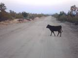 -2621 Cattle Crossing Rd - Photo 9