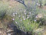 -2391 Yucca Dr - Photo 27