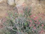 137 Arroyo Vista Dr - Photo 8