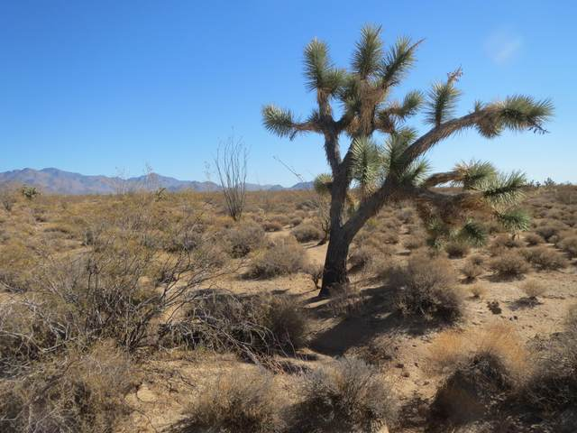 3181 Butch Cassidy Road, Yucca, AZ 86438 (MLS #1013926) :: Realty One Group, Mountain Desert