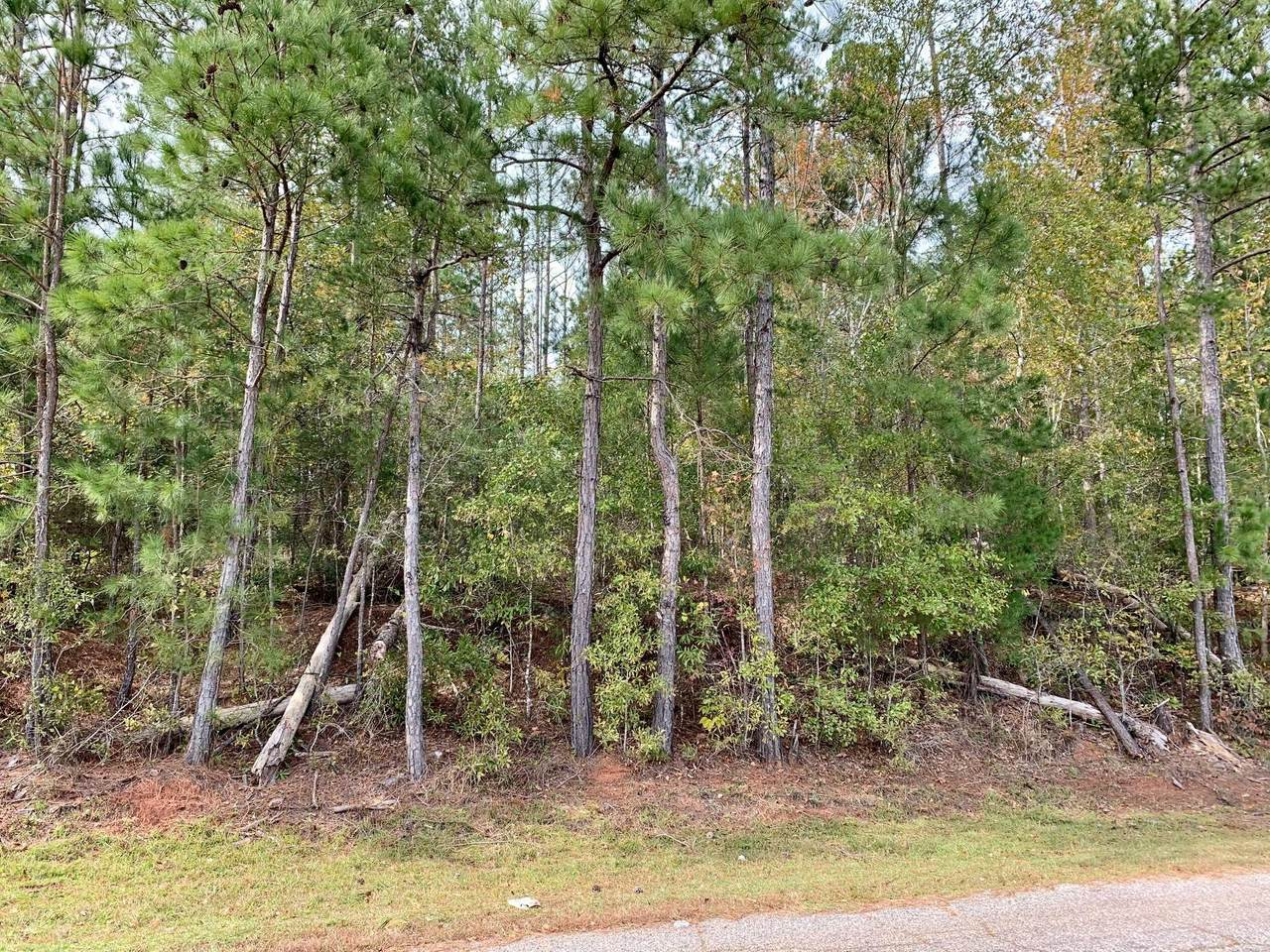 3+/- Acres Old Millers Ferry Road - Photo 1