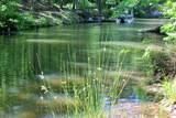 Lot 18 Water Oak Run - Photo 16