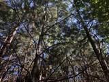 Partridge Creek - Photo 44
