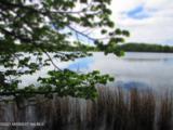 20 Acres Sybil Lake Road - Photo 42
