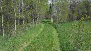 80 ACRE County Road 4, Mahnomen, MN 56557 (MLS #86-486) :: Ryan Hanson Homes Team- Keller Williams Realty Professionals