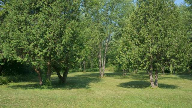 0 Nottingham Drive, Laingsburg, MI 48848 (MLS #247502) :: Real Home Pros