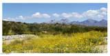 6110 Lazo Del Sur - Photo 1
