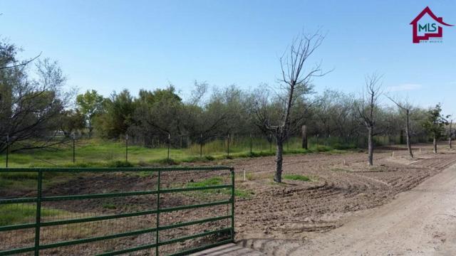 350 Scorpio Loop, Las Cruces, NM 88005 (MLS #1702909) :: Steinborn & Associates Real Estate