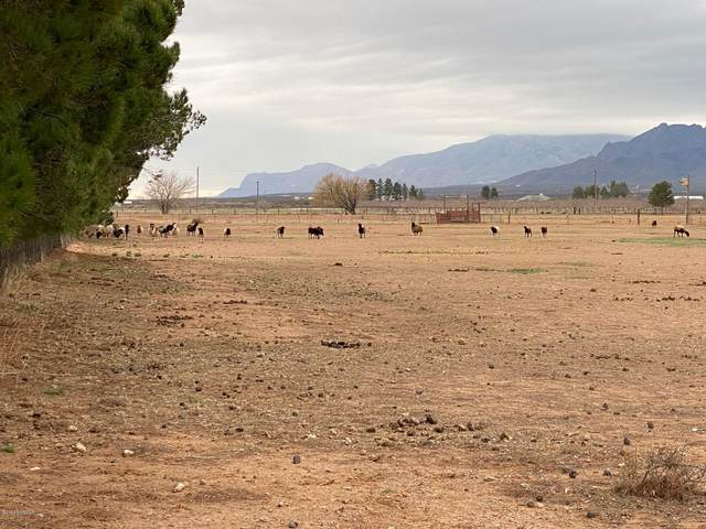 0 Javalina Street, Chaparral, NM 88081 (MLS #2000491) :: Steinborn & Associates Real Estate