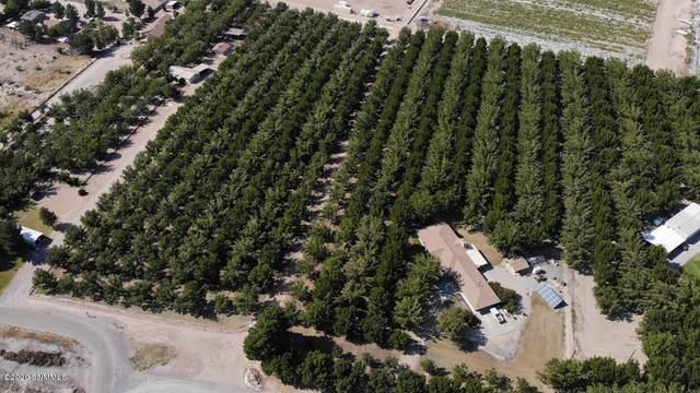 4595 Lamar Road, Las Cruces, NM 88005 (MLS #2002841) :: United Country Real Estate Revolution
