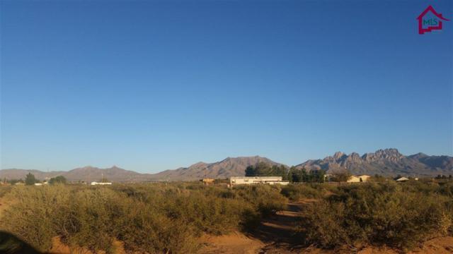 001 Mesa Drive, Las Cruces, NM 88012 (MLS #1602136) :: Steinborn & Associates Real Estate