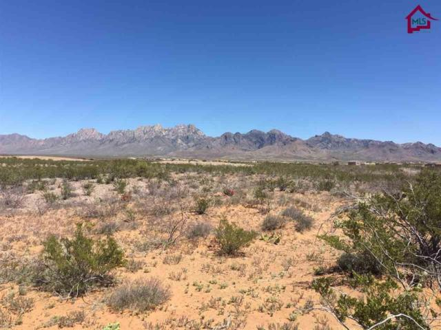 0000 Dripping Springs Road, Las Cruces, NM 88011 (MLS #1700902) :: Agave Real Estate Group