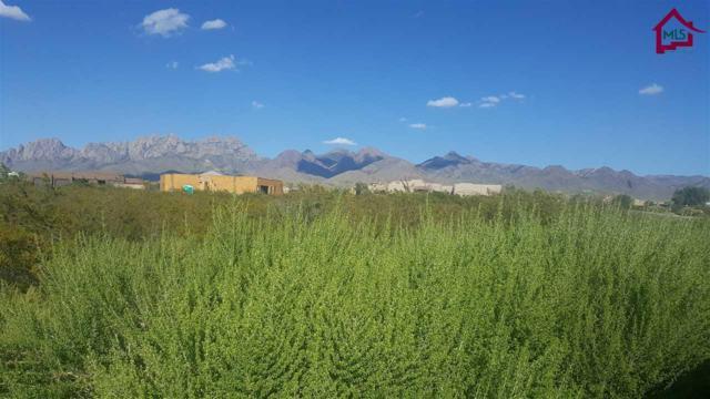 3925 Quail Brush Court, Las Cruces, NM 88011 (MLS #1702709) :: Steinborn & Associates Real Estate