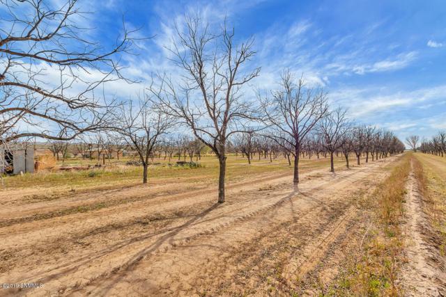 379 Hayride Road, Las Cruces, NM 88007 (MLS #1900762) :: Steinborn & Associates Real Estate