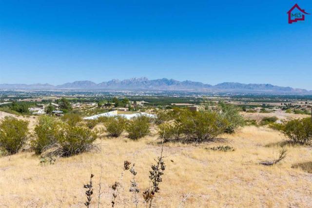6000 Larkspur Way, Las Cruces, NM 88005 (MLS #1702915) :: Steinborn & Associates Real Estate