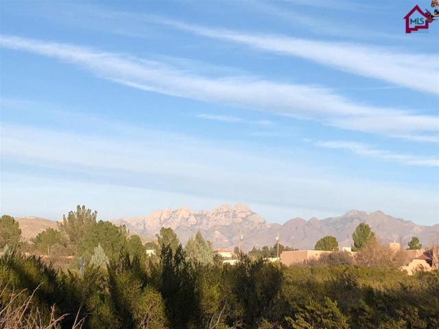 4062 Sotol Drive, Las Cruces, NM 88011 (MLS #1800012) :: Steinborn & Associates Real Estate
