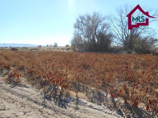 6665 Highway 187, Garfield, NM 87936 (MLS #1703457) :: Steinborn & Associates Real Estate